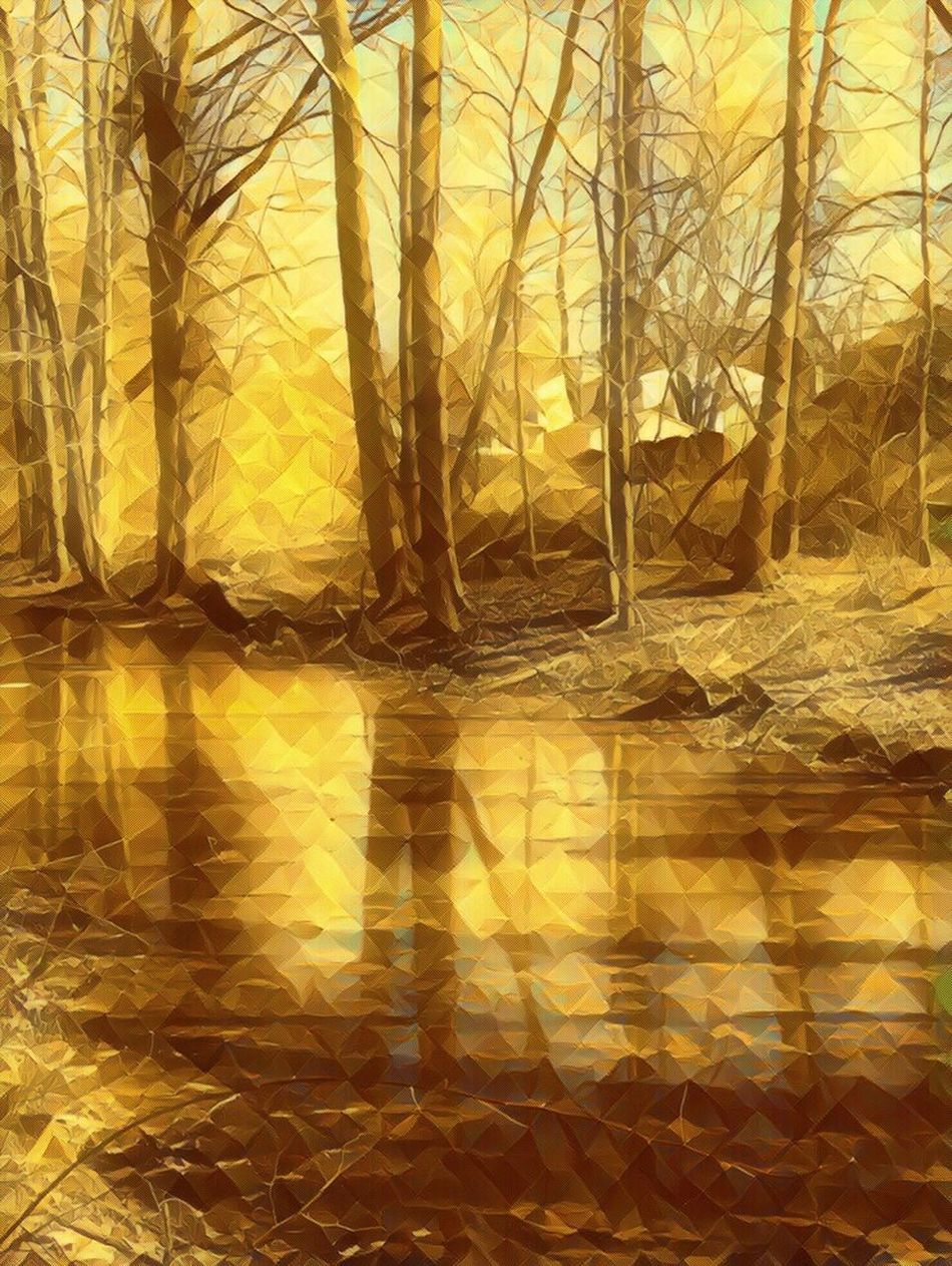A golden view filter of the stream in the woods Reflection Yellow Nature Forest Fog No People Tree Outdoors Close-up Day IPhoneography Camerafilters