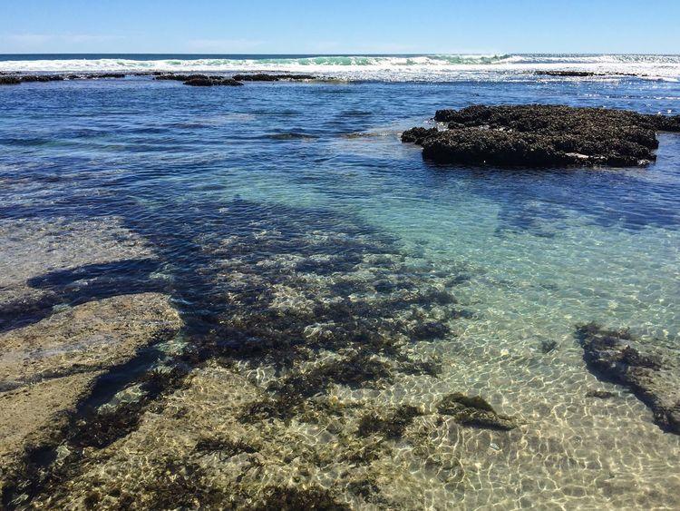 Blue Holes Western Australia Australia Kalbarri Blue Holes Reef Indian Ocean Shallow Water Sea Seascape Travel Snorkeling Clear Water Waves Barnacles Nature Photography Nature Beach Coastline Coastal Coral Coast Rock Pools