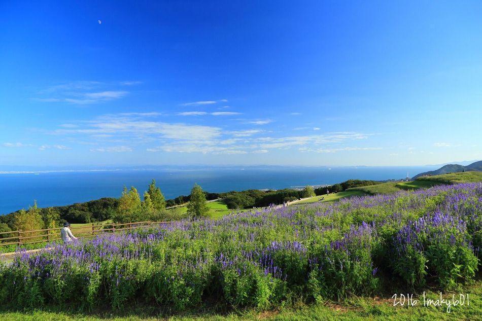 2016.10.10 感極まってキャプを書きすぎたけど、全部消した。綺麗な写真の世界は、綺麗なままでいい。とにかく、幼少期からのパンドラの箱を開ける力がついた。Camera: Canon6d Lens: EF24-105F4L w/ PLフィルター Landscape 淡路島 Japan 瀬戸内海 Nature ブルーサルビア Flower Seascape Nature_collection (null)Sky