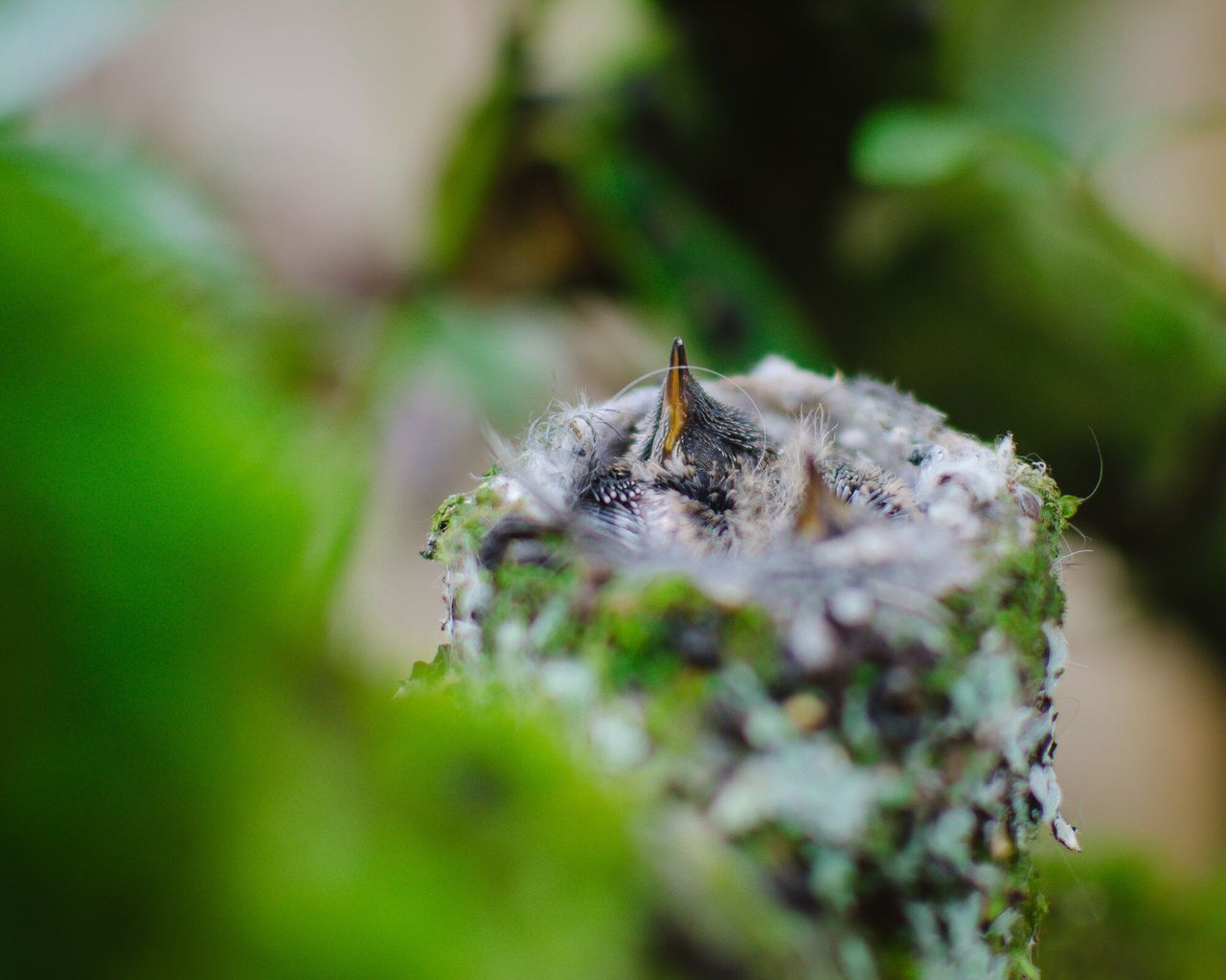 14 day old hummingbird chicks. Animal Themes Animals In The Wild One Animal Insect Nature Animal Wildlife Close-up No People Day Outdoors Birds Of EyeEm  Bird Photography Birds Hummingbird