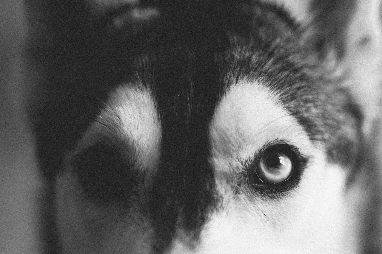 Beautiful stock photos of wolf, Animal Body Part, Animal Eye, Animal Themes, Detail