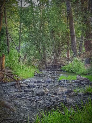 Babbling Brook In Seven Oaks Nature Abundance Creekside Outdoors Rivers EyeEm Eye4photography  Perspective Babbling Brook Rocks Awe Inspiring Eyeemphotography Beauty In Nature Breathtaking Idyllic Home Is Where The Art Is From My Point Of View ForTheLoveOfPhotography