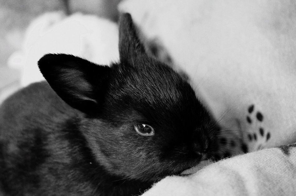 Funnybunny Bunny  Monochrome Blackbunny Black And White