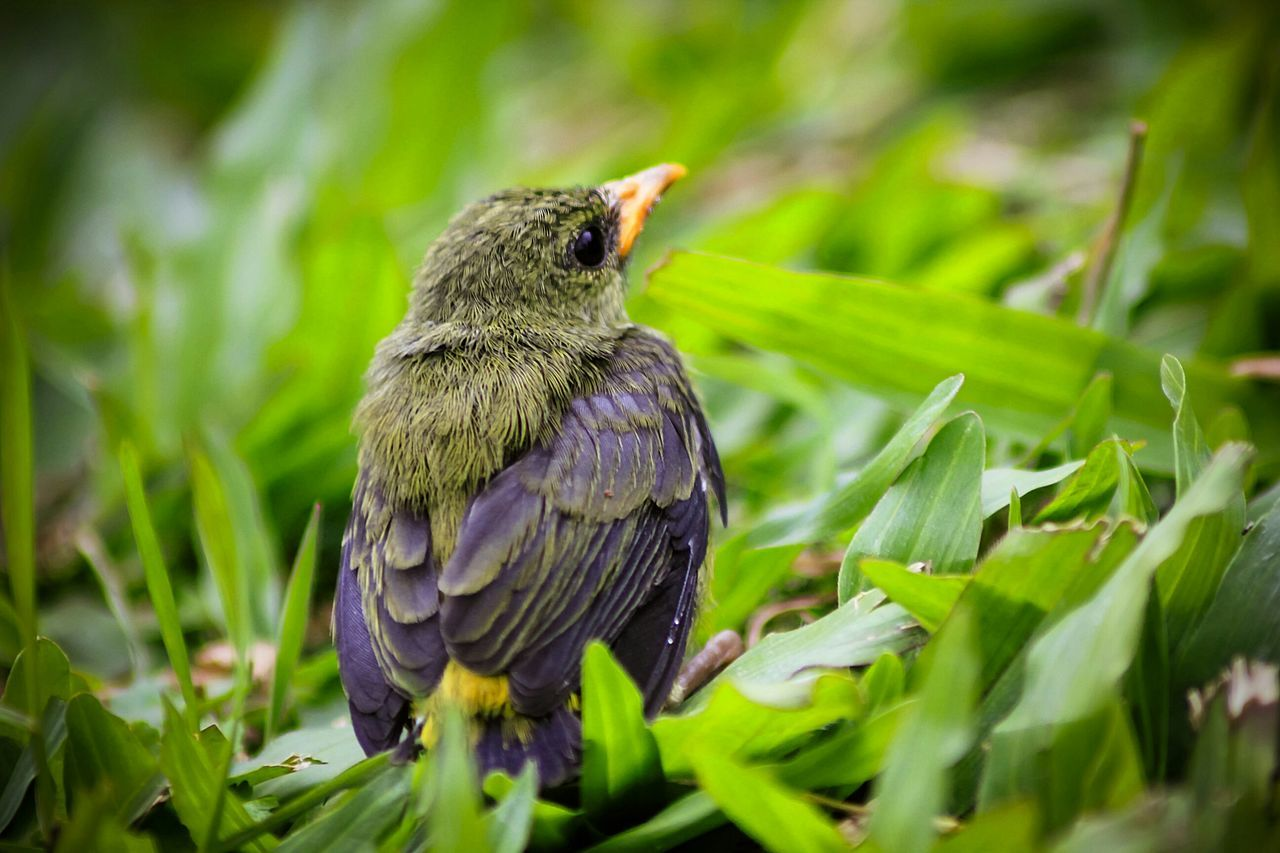 Small Bird Siting Between Green Leaves