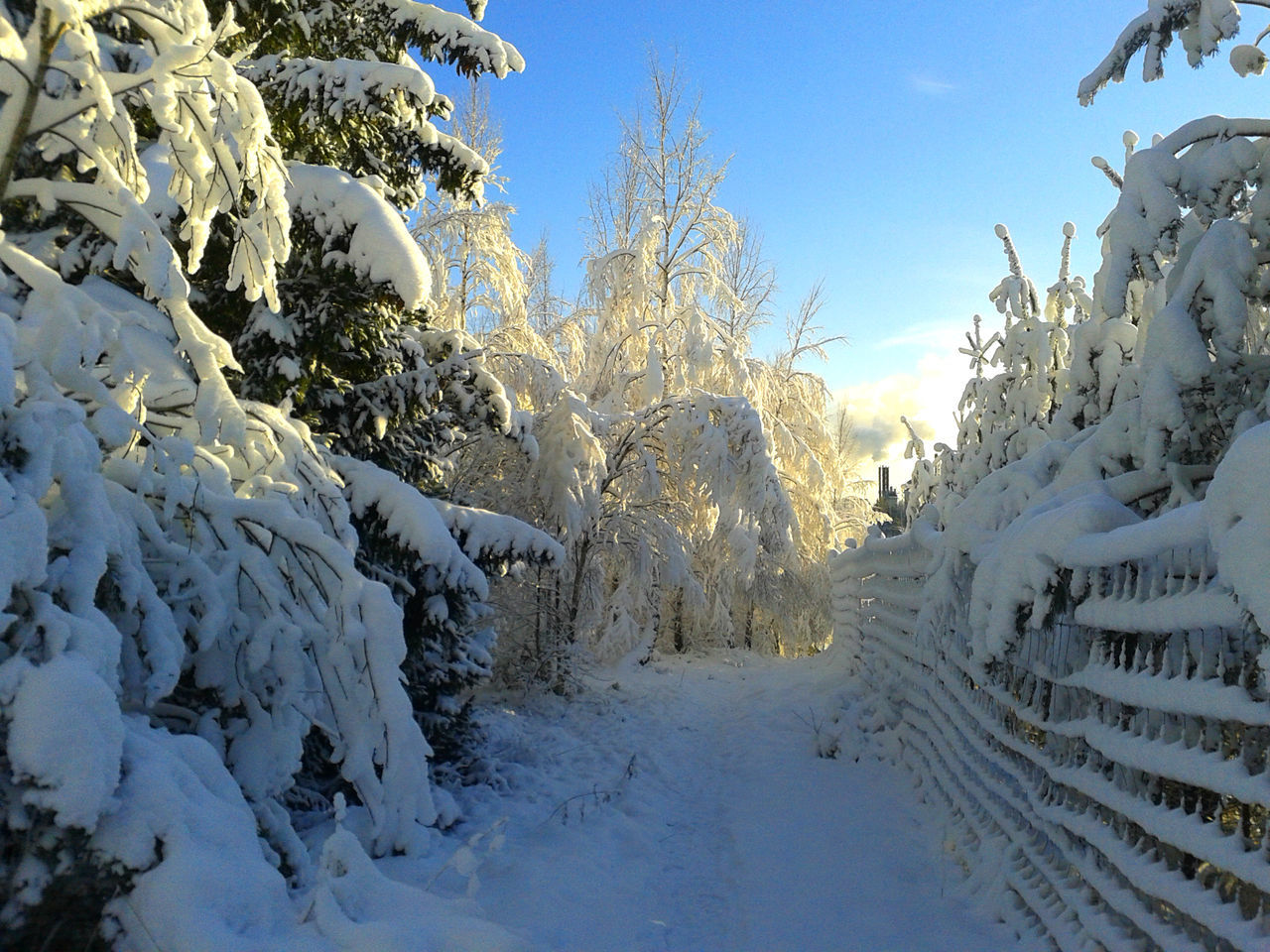 Snow Covered Footpath By Trees