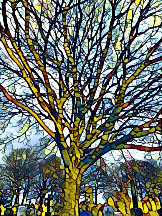 Low Angle View Tree Growth Nature Branch No People Beauty In Nature Day Outdoors Sky Backgrounds Close-up Colours And Light Branches And Sky Playing With Effects