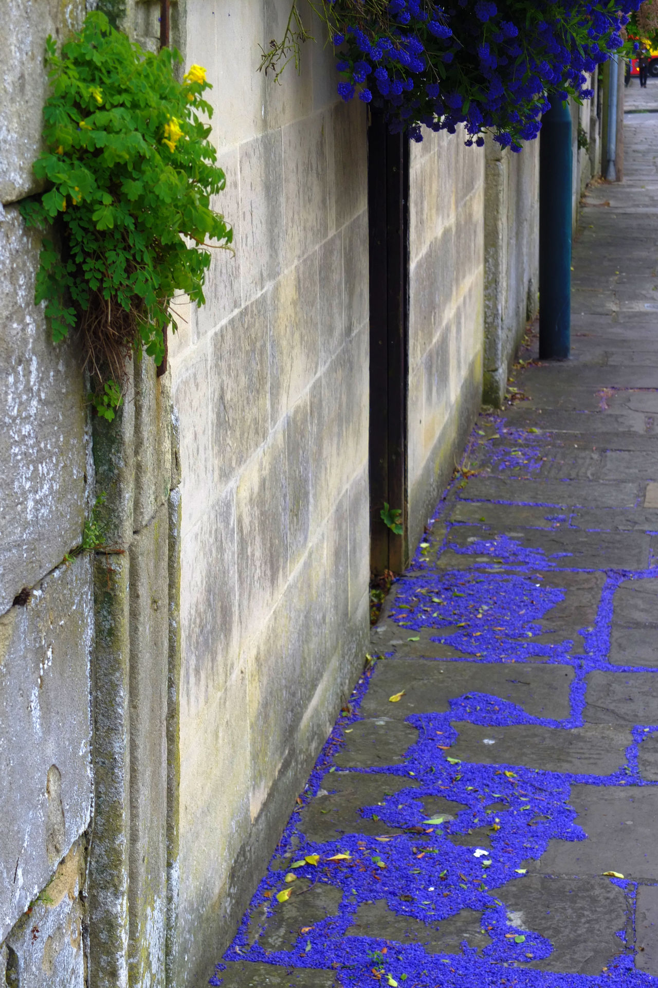 Architecture Beauty In Nature Blue Flowers Built Structure No People Paving Stone Petals Street Urban Landscape