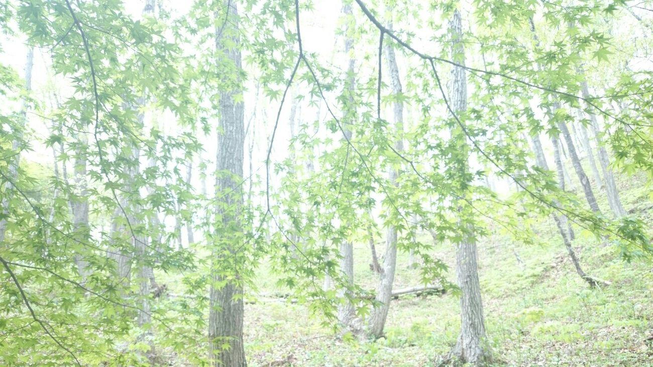 Relaxing Trees Japan Landscape