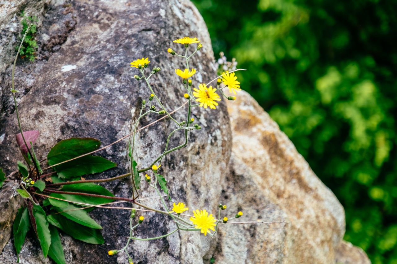Animal Themes Animal Wildlife Animals In The Wild Beauty In Nature Close-up Day Flower Flower Head Fragility Growth Insect Nature No People One Animal Outdoors Perching Plant Tree Yellow