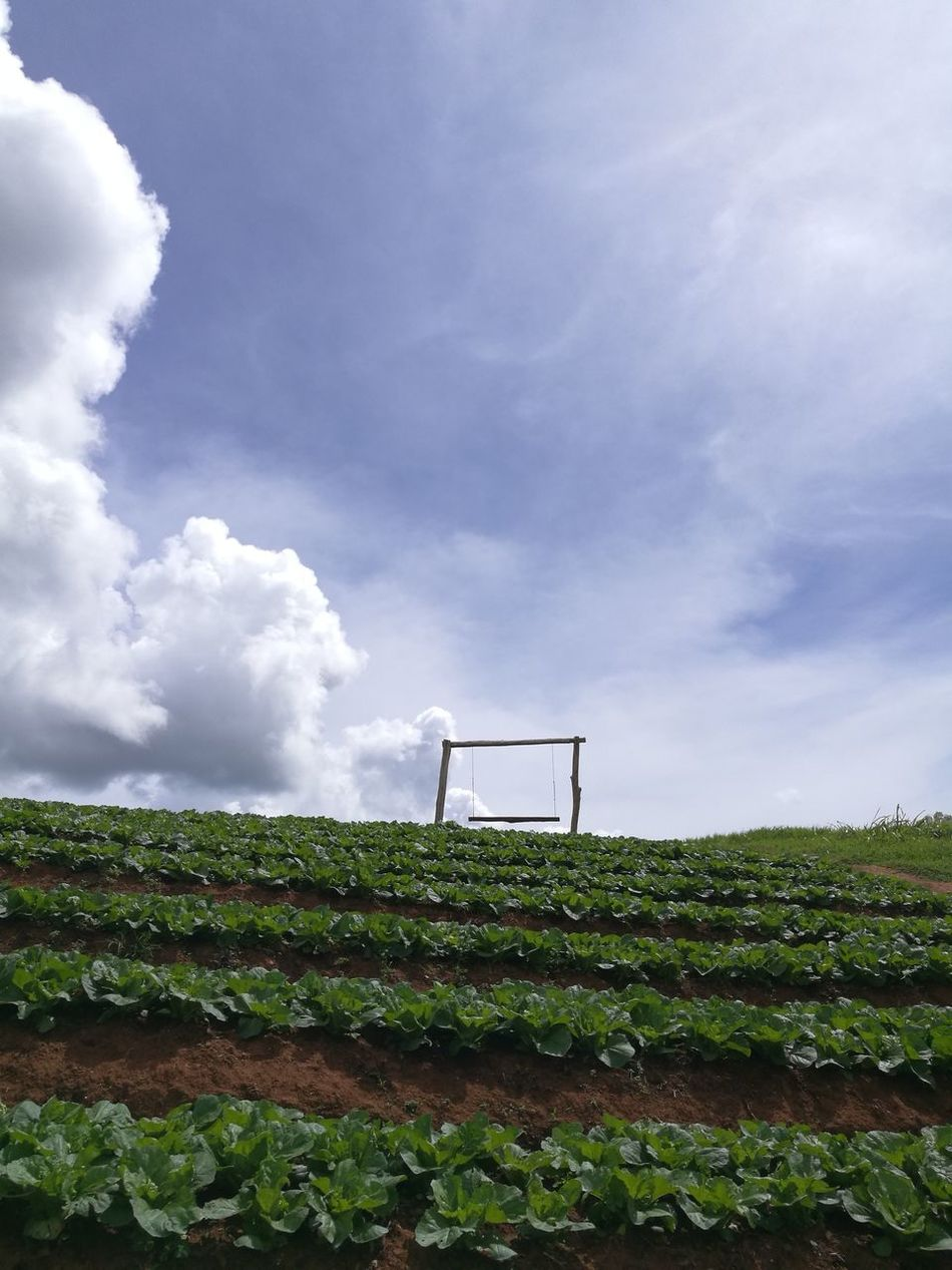 swing on farm Hanging Out Check This Out Relaxing Sky And Clouds Enjoying Life Cheese! Mon Jam Chiang Mai   Thailand