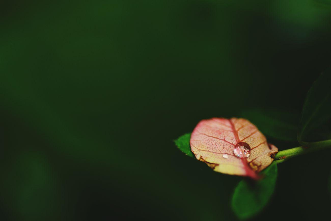 Taking Photos Japan Nikon D5200 TAMROM EyeEm 2015 In My Garden... 重なり合う 雫 Rain Drops