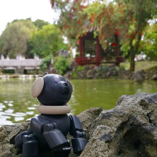 AIBO Aibobox Sonyaibo Sony ERS-300 Latte Macoron Chinese Garden Japan Dog Robot Spring Garden Outdoors Pond Sitting Tree Nature Day Grass Beauty In Nature Toy No People Happiness Flower