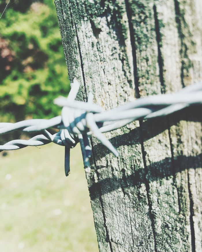 Bob-wire fince post Close-up Sharp Protection Fence Safety Focus On Foreground Spiked Outdoors No People