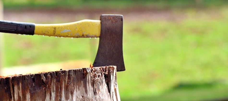 Australia Close-up Day Forest Human Hand Outdoors Pemberton People Tree Tree Stump Western Australia Wood - Material