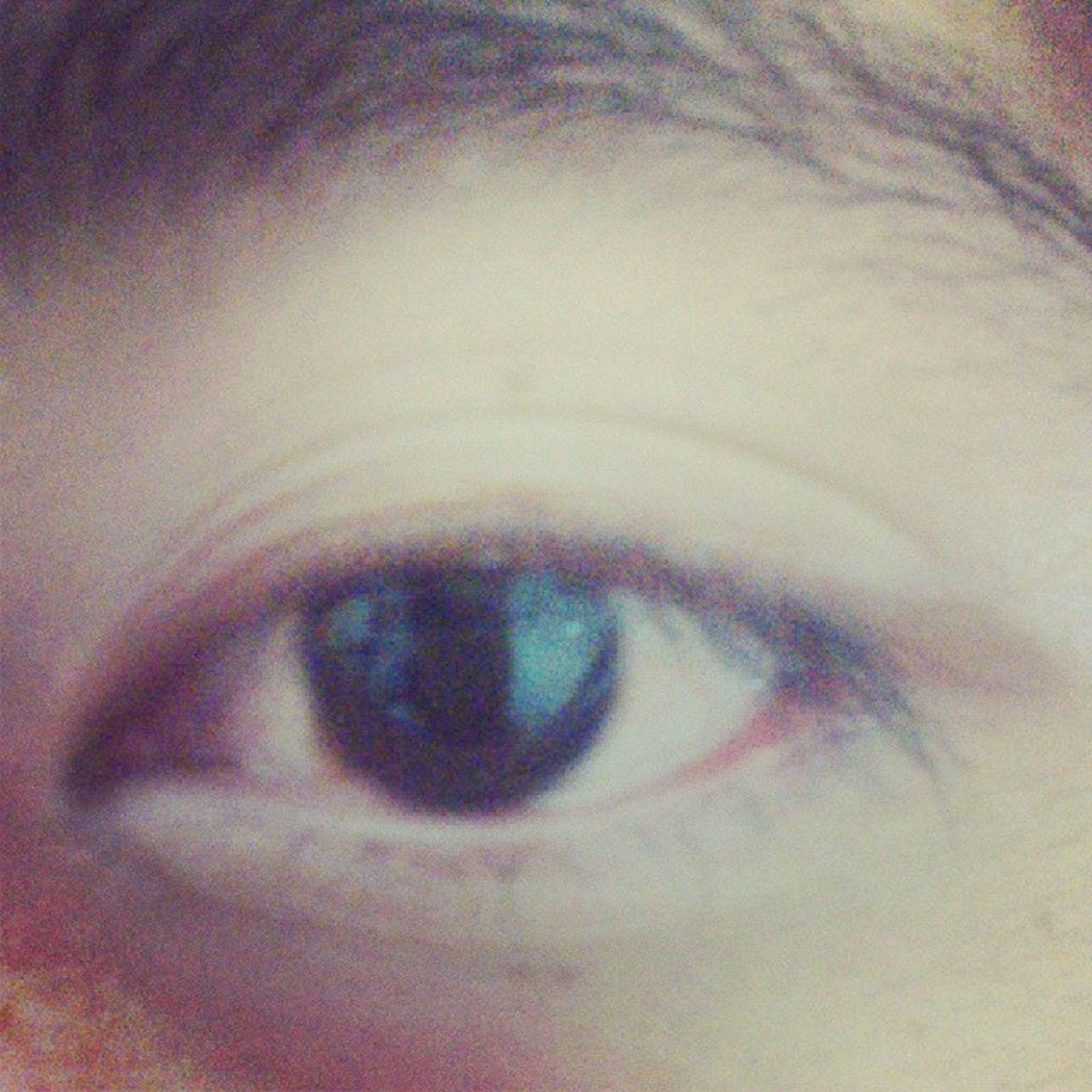 human eye, close-up, eyelash, full frame, extreme close-up, eyesight, sensory perception, part of, looking at camera, indoors, portrait, backgrounds, extreme close up, eyeball, detail, human skin, iris - eye