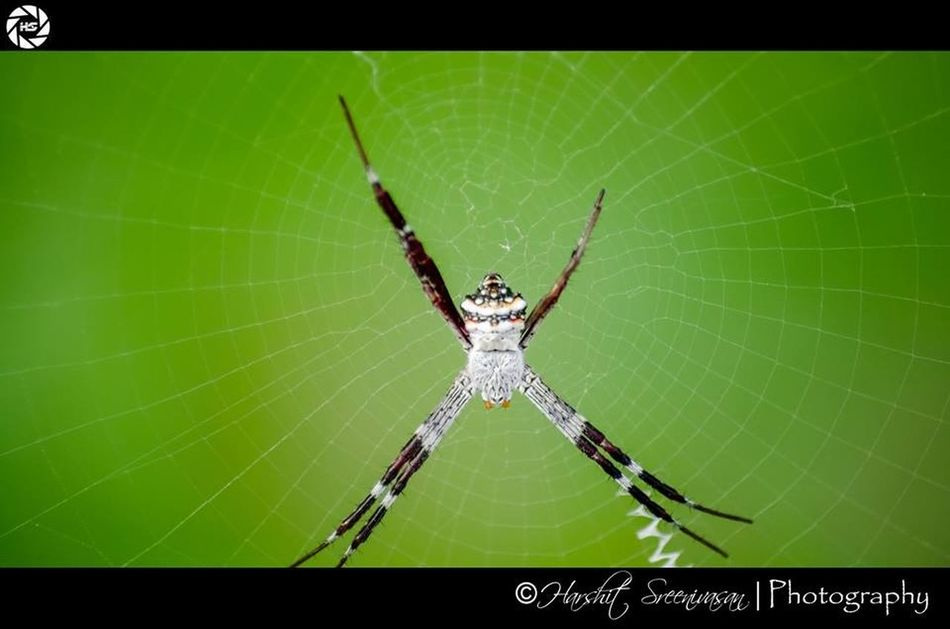 Webbed...! Spider macro nature wild colorful Sightseeing