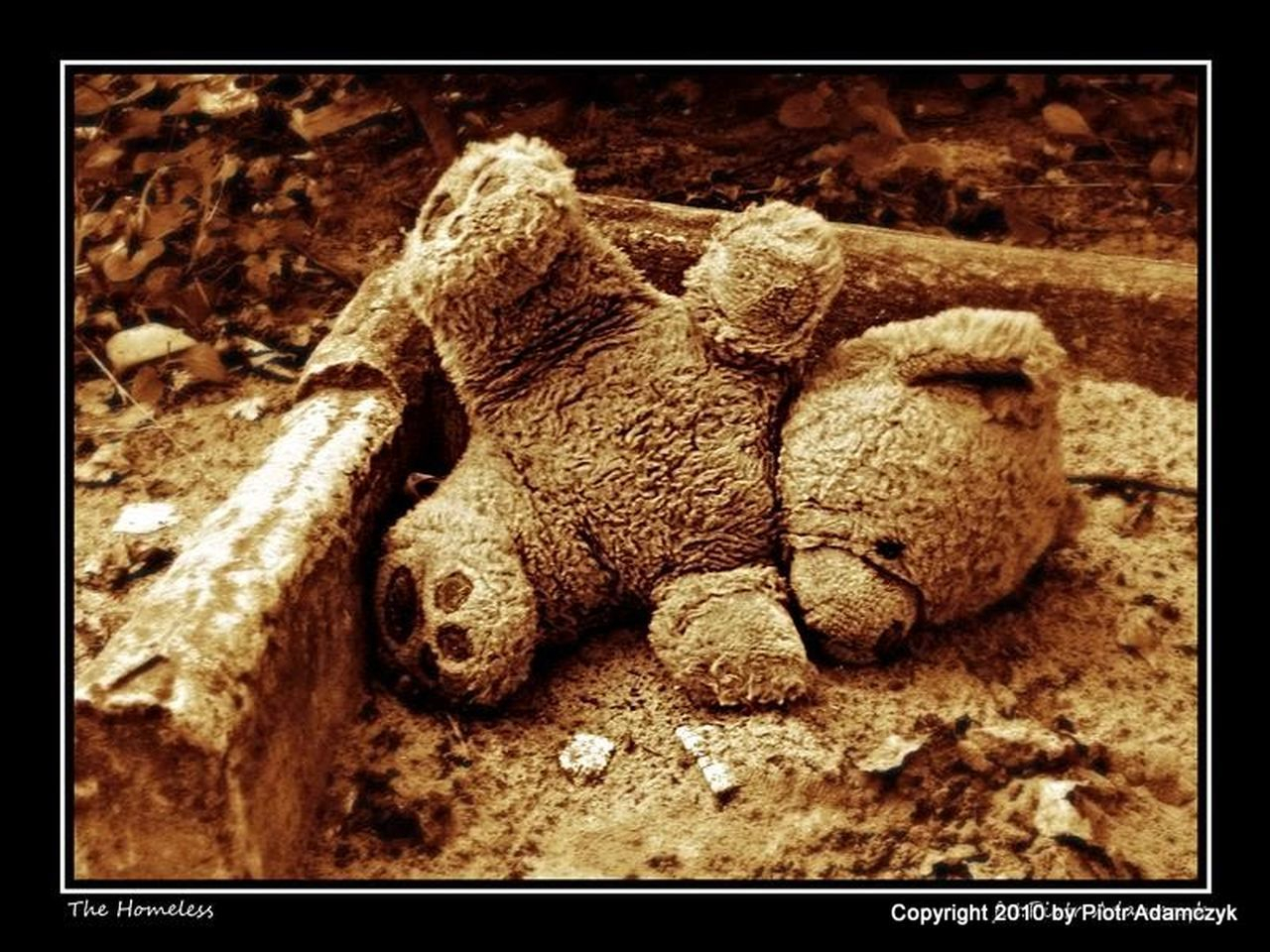 auto post production filter, close-up, no people, teddy bear, childhood, stuffed toy, day, indoors