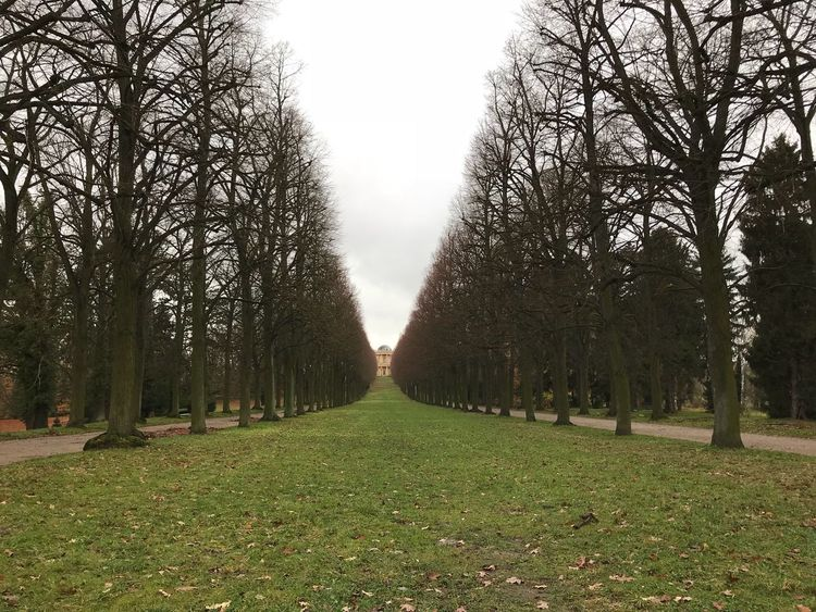 Tree Grass No People Potsdam Park Sanssouci GERMANY🇩🇪DEUTSCHERLAND@ Europe Travel Destinations Bare Tree Nature Tranquility Tranquil Scene Outdoors Beauty In Nature Day Growth The Way Forward Scenics Branch Landscape Sky