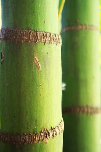 Tree Treetrunks Closeupshot Green Garden Photography