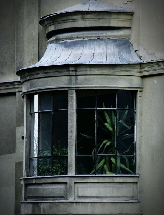 Lookinside the House Fromthestreets Plant Window