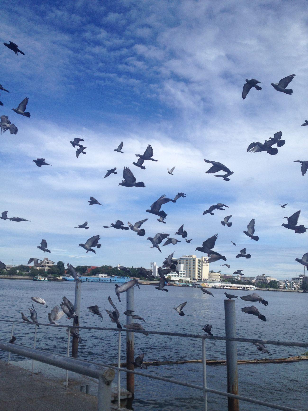 Freedom #pigeon #nature #sky #riverfront #bangkok #thailand.