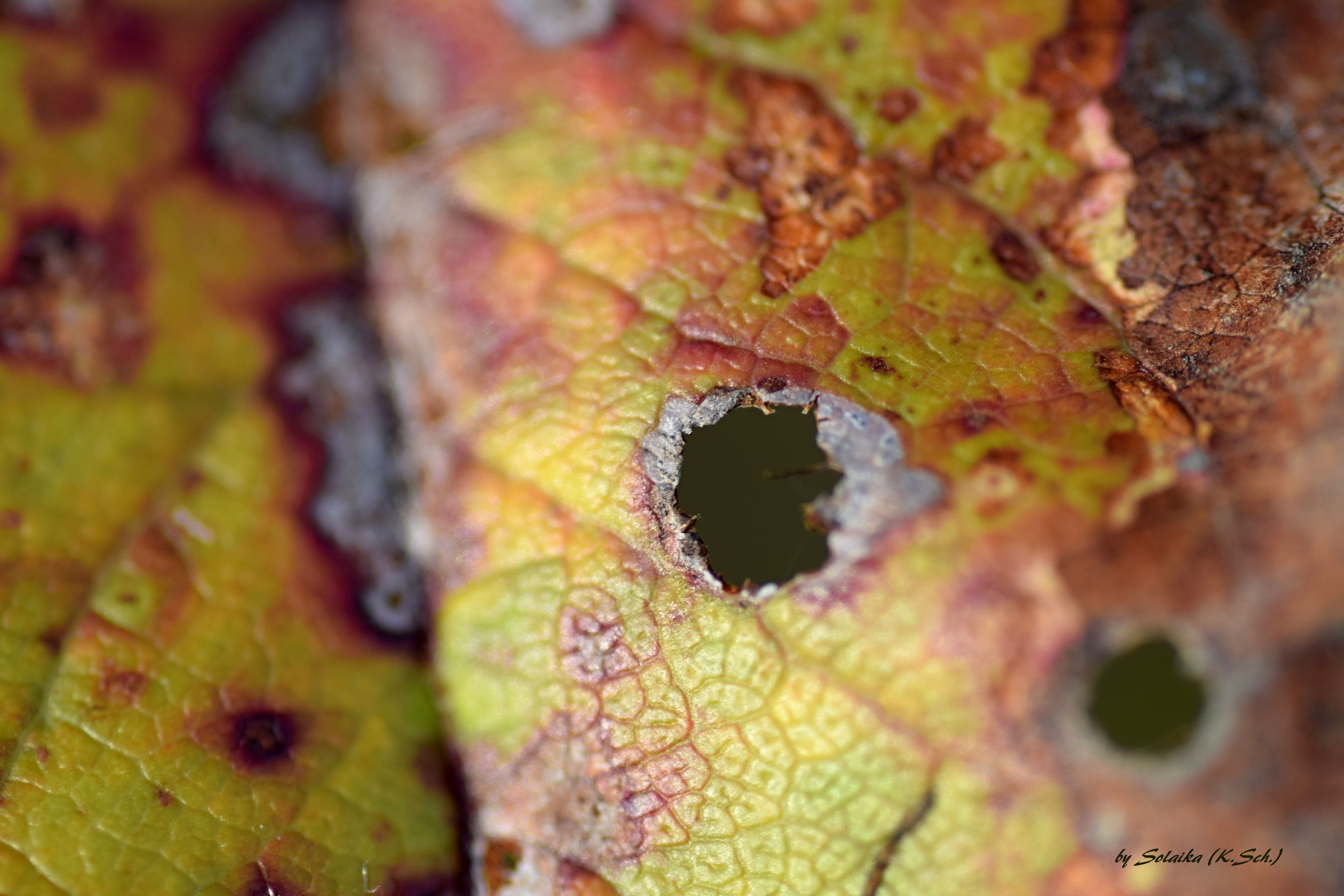 leaf, close-up, leaf vein, natural pattern, autumn, textured, nature, full frame, backgrounds, focus on foreground, selective focus, yellow, pattern, outdoors, change, day, detail, season, growth, no people