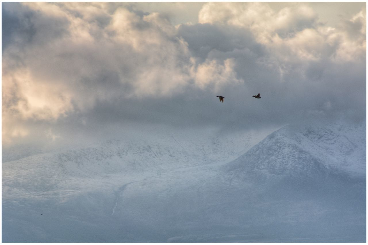 Ducks fly past snow-capped and cloudy Isle of Arran - series Snow Winter Flying Weather Cold Temperature Nature Sky Mid-air Cloud - Sky Beauty In Nature Outdoors Mountain Day Scenics No People Ducks Birds Bird Photography EyeEm Gallery EyeEmBestPics Eye4photography  EyeEm Arran  Isle Of Arran  Mountains