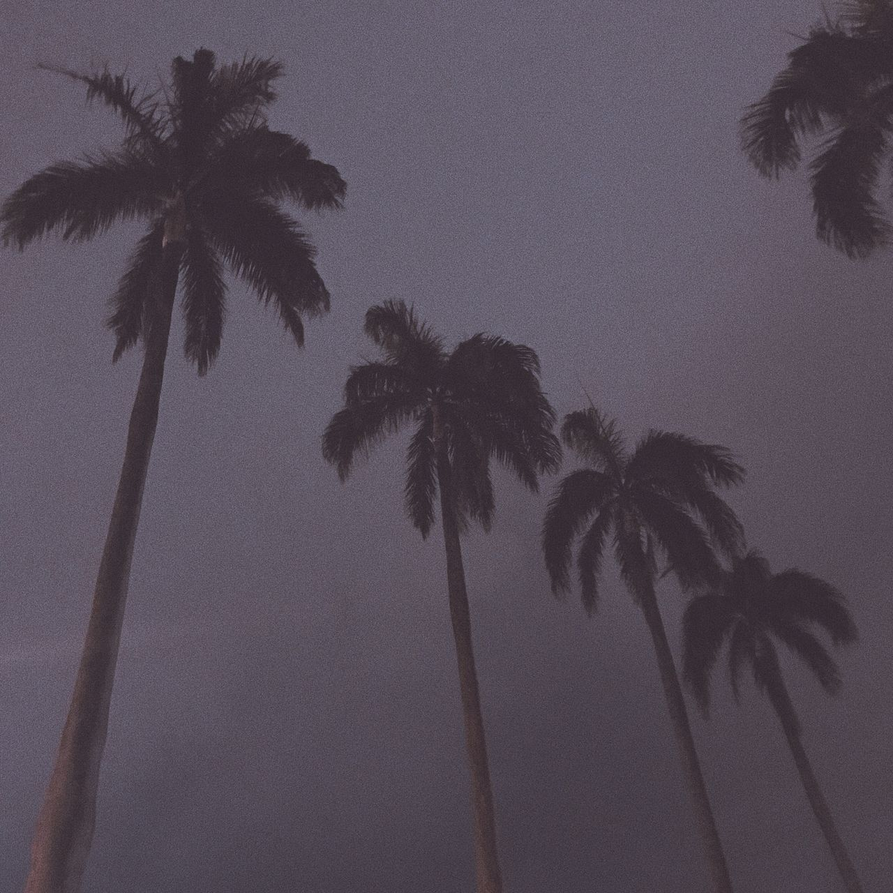 palm tree, tree, tree trunk, tropical climate, low angle view, beach, palm frond, scenics, nature, growth, silhouette, tranquility, no people, beauty in nature, sky, outdoors, tall, tranquil scene, vacations, day, clear sky, travel destinations, summer, sea, adventure