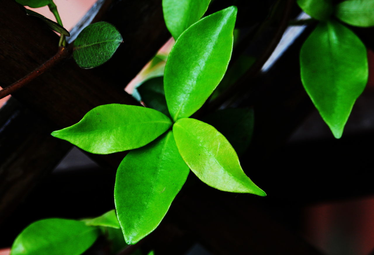 Close-up Day Green Color Growth Leaf March 2017 Milano Nature No People On My Balcony Outdoors Plant