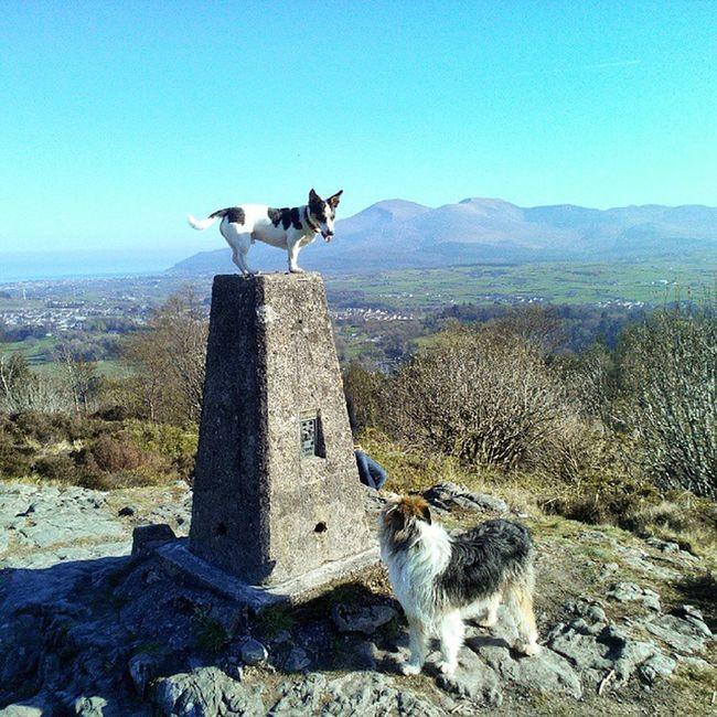 Jack and Bo Doggies Mournes Jackrussell Beardedbordercollie