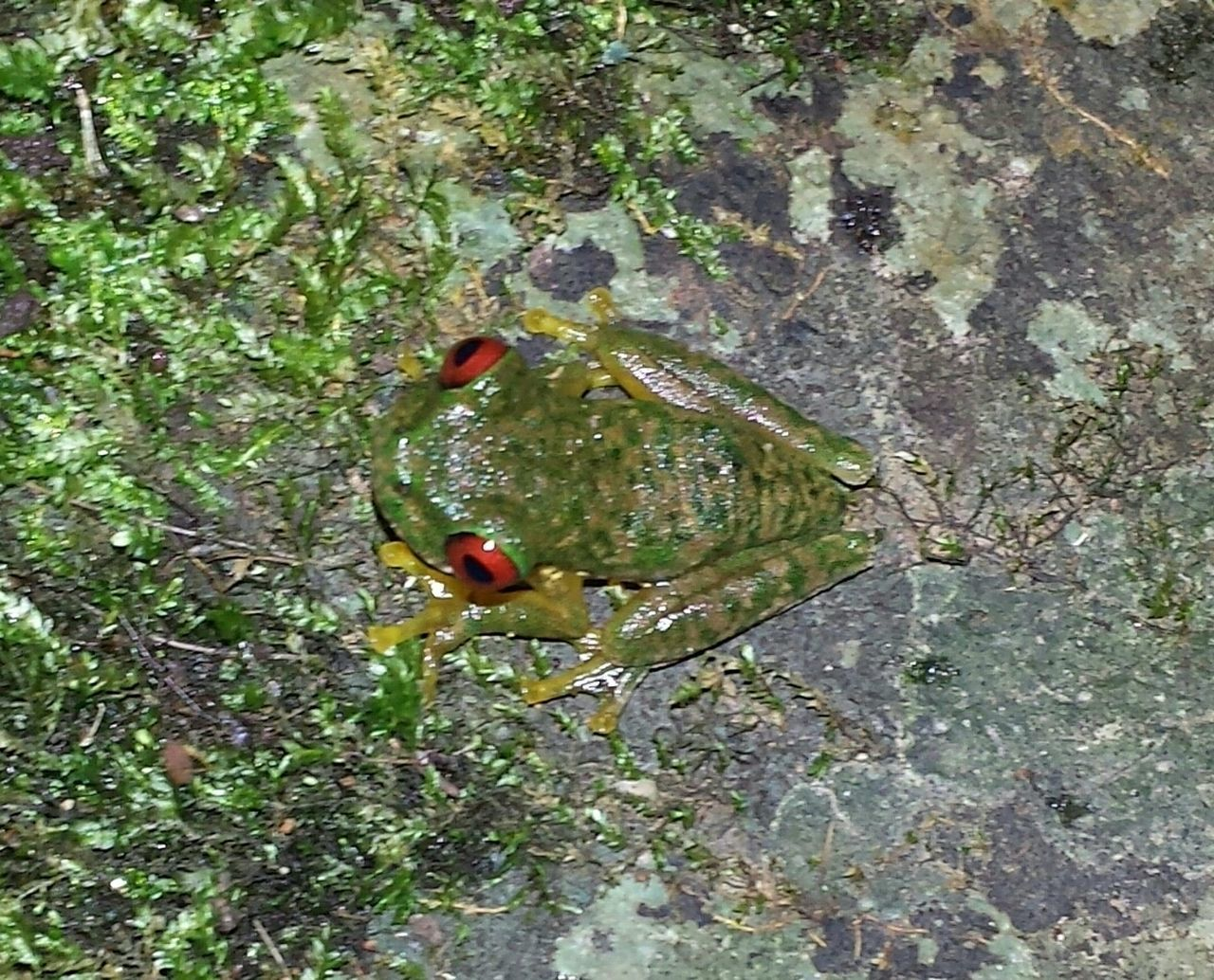 Frog Nature Taking Photos Traveling