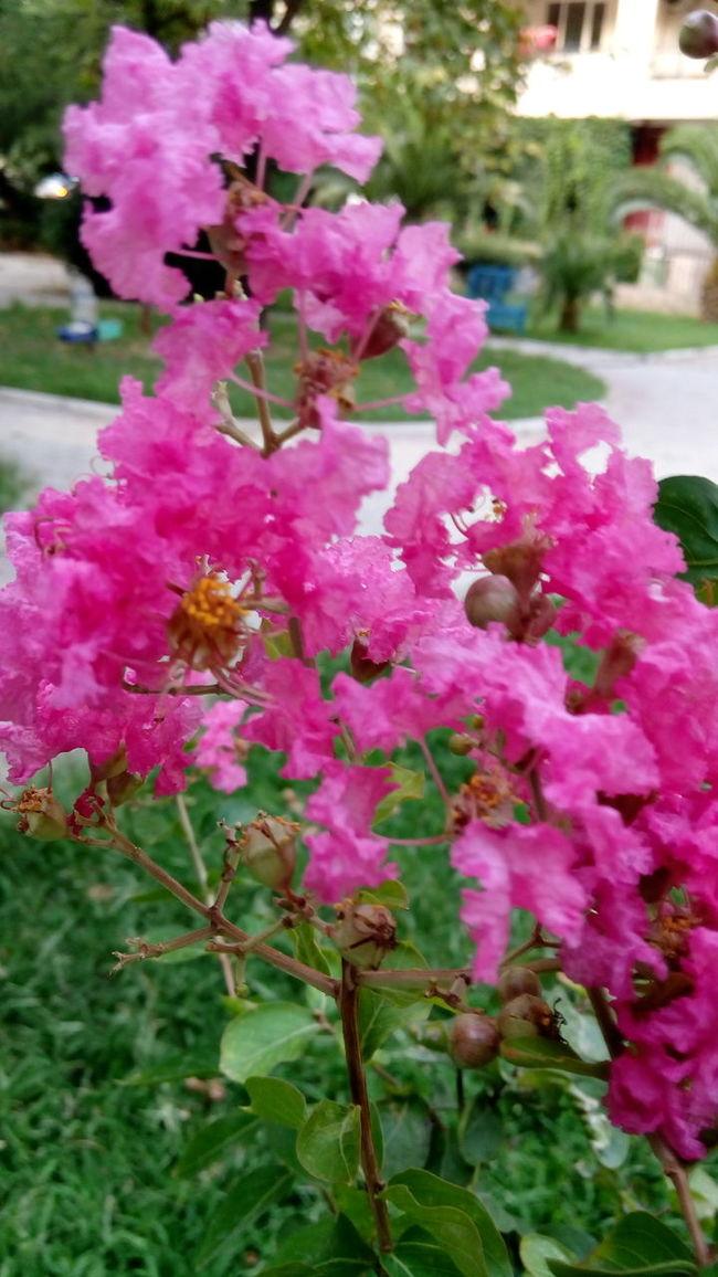 flowers ızmir
