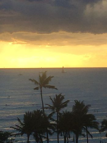 Cloud - Sky Sunset Horizon Over Water Palm Tree No People Tropics Tropical Sun Sunlight Yellow Color Gray Color Tropical Sunset Island Of Oahu, Hawaii Oahu Oahu, Hawaii Tropical Island Pacific Ocean View Honolulu, Hawaii No Edit/no Filter Perspectives On Nature Oahu Hawaii Oahu Sunset Oahu / Hawaii An Eye For Travel