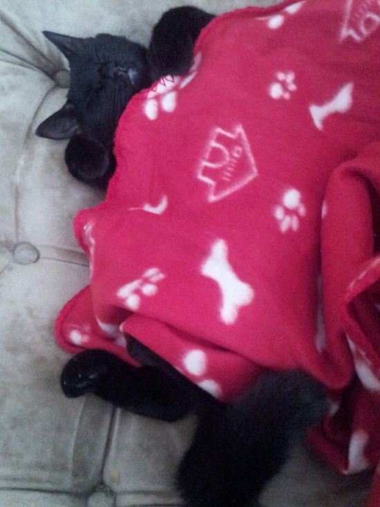 Check This Out Catnap Humanised Cute Pets Steal The Blanket Sleepytime My Smartphone Life Cats Think Theyre Gods