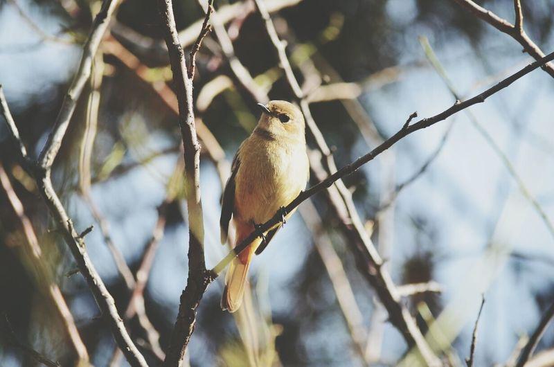 ジョウビタキの女の子 EyeEm Birds Keicomoment