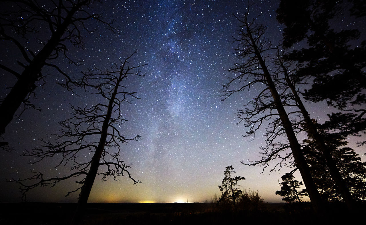 Dead trees at night with stars and the Milky Way on the sky Astronomy Bare Tree Beauty In Nature Darkness Deadwood  Low Angle View Milky Way Mysterious Mysterious Landscape Nature Night Night Sky No People Outdoors Scenics Silhouette Sky Star - Space Stars Tranquil Scene Tranquility Tree Tree Trunk Trees Twilight
