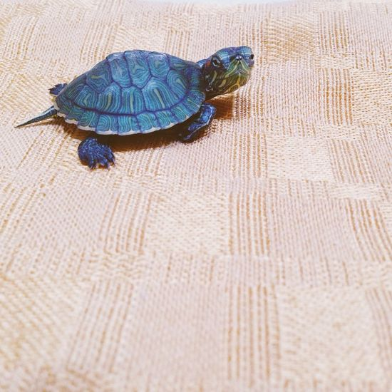 My Turtle is way cooler than yours. MypetDONATELLA Hello World