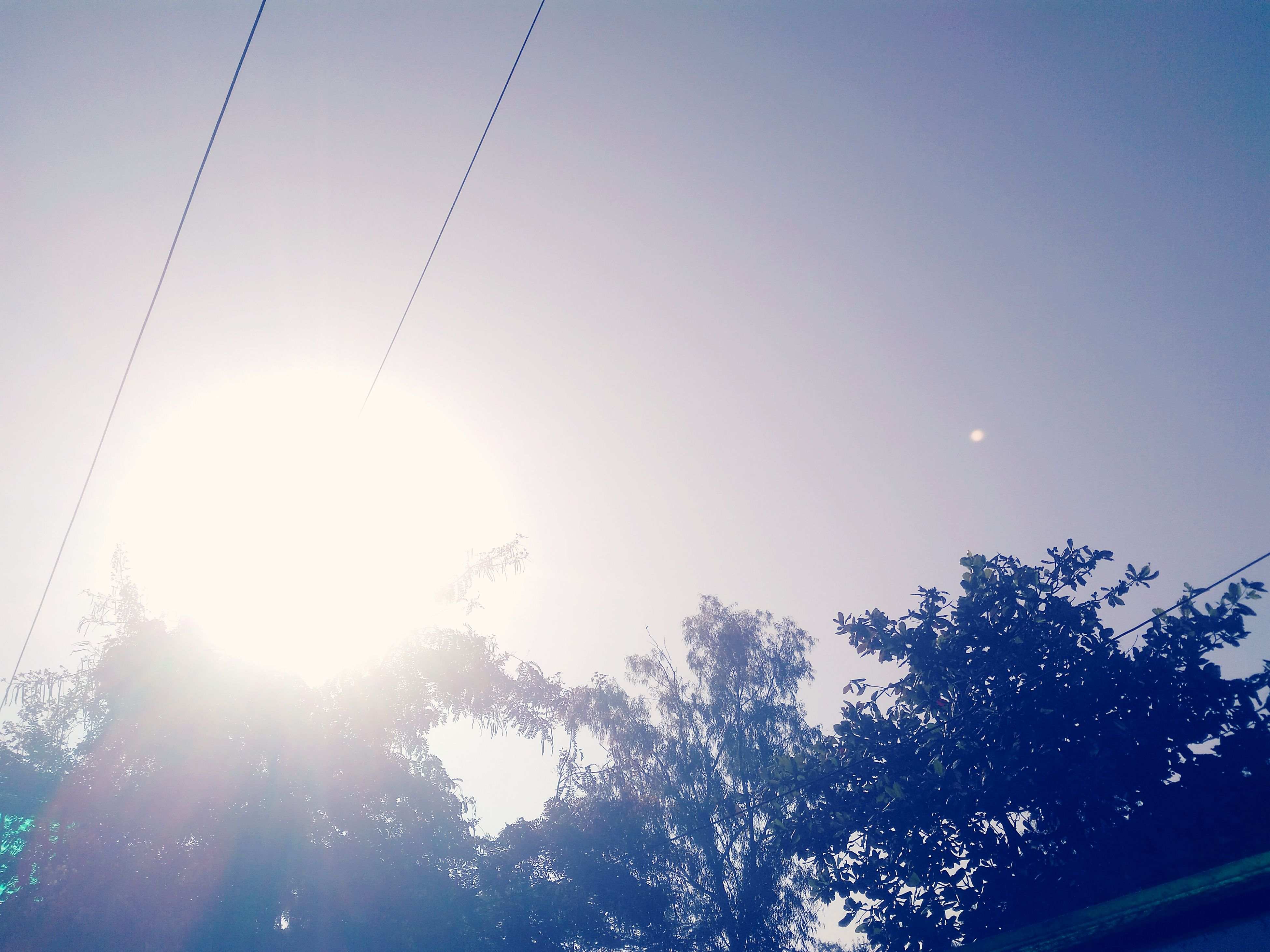 sun, low angle view, sunbeam, tree, lens flare, clear sky, sunlight, silhouette, bright, nature, sky, beauty in nature, tranquility, branch, street light, outdoors, sunny, growth, no people, day