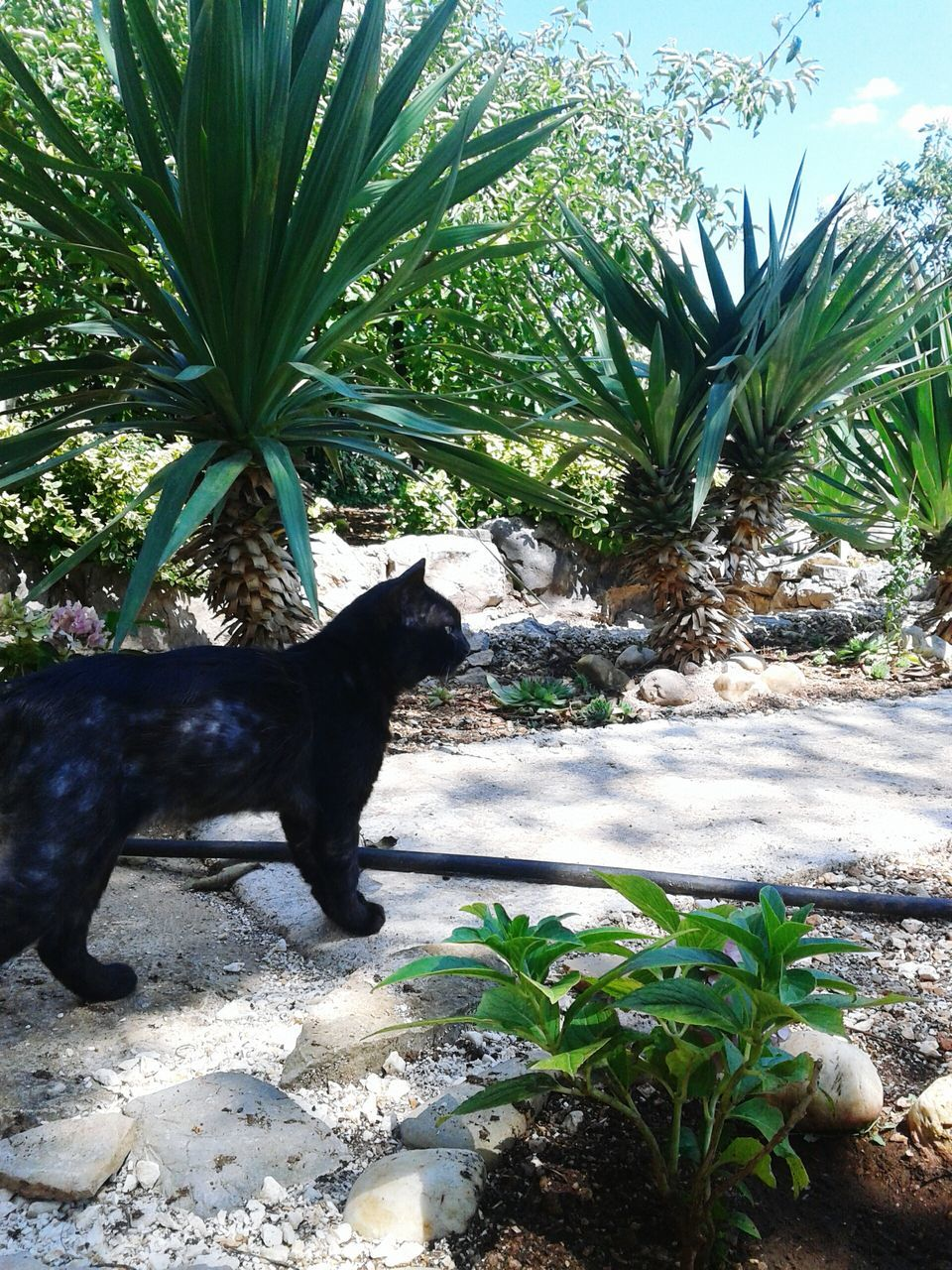 pets, one animal, plant, animal themes, domestic animals, mammal, growth, leaf, nature, domestic cat, no people, outdoors, dog, day, green color, sitting, tree, palm tree