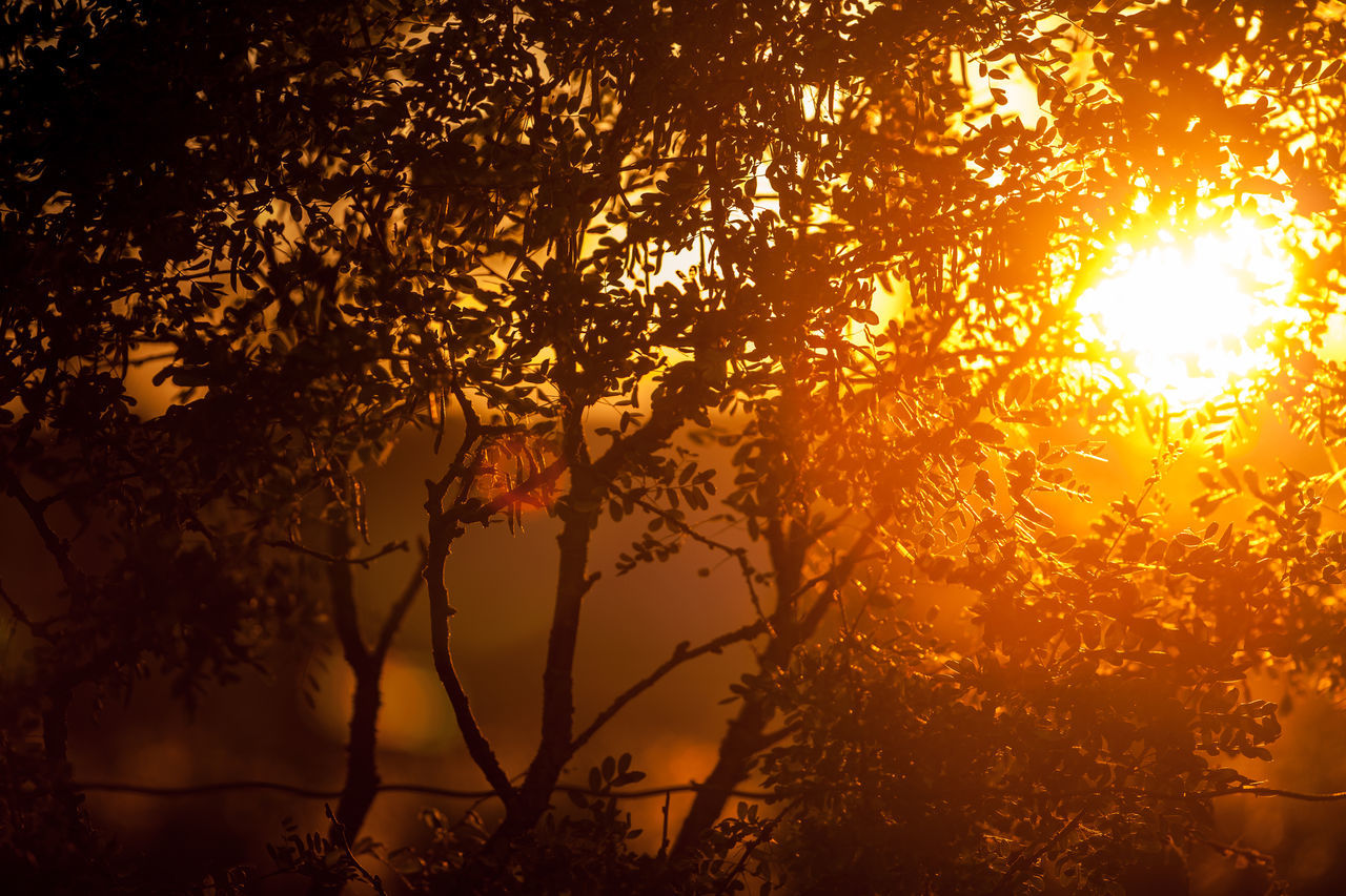 Good night Against The Light Against The Sun Beauty In Nature Branches Foliage Golden Hour Light Nature Norway Oddane Sand Silhouette Sun Sunlight Sunset Trees