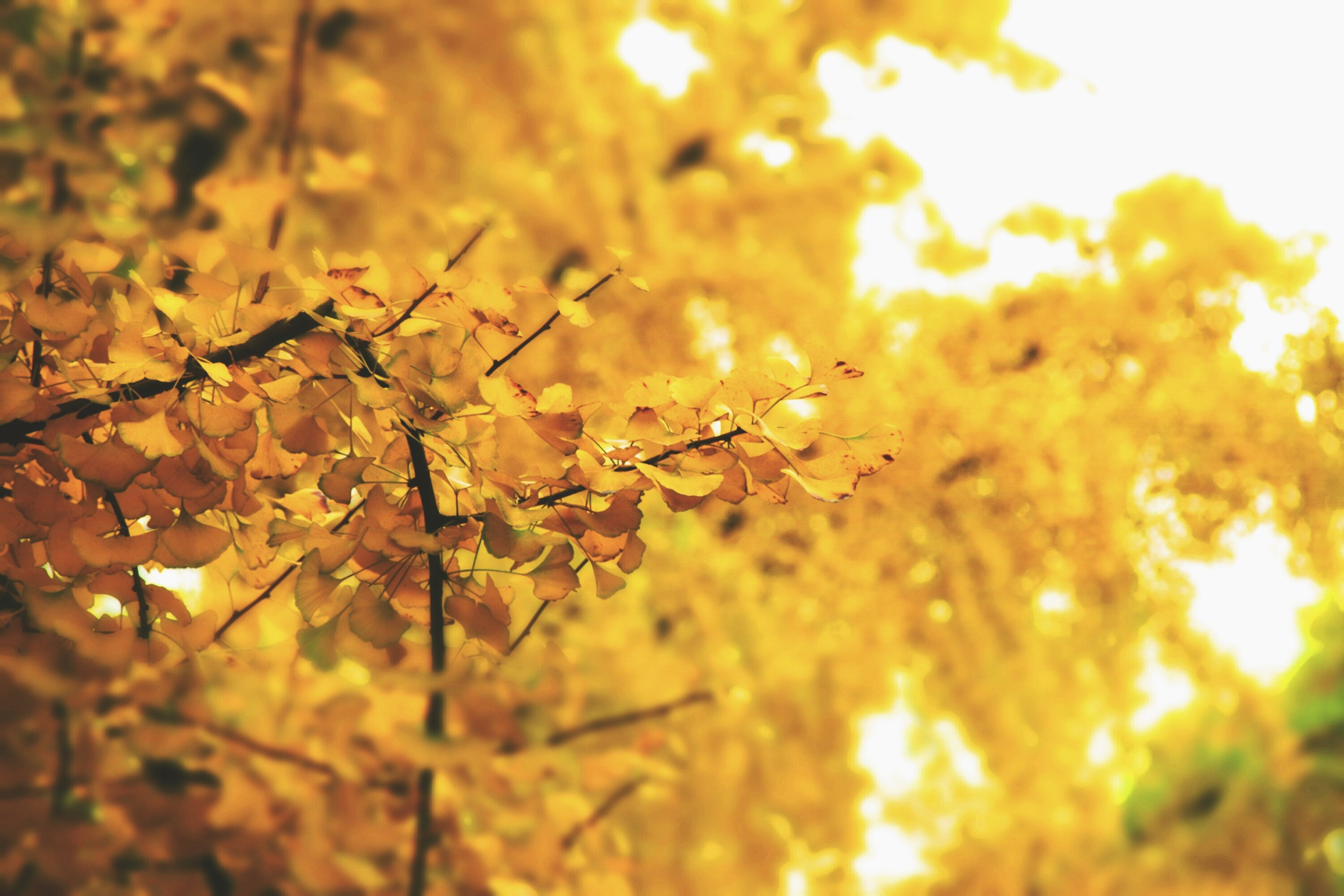 nature, growth, outdoors, no people, beauty in nature, tree, leaf, close-up, autumn, day, plant, branch, freshness, fragility