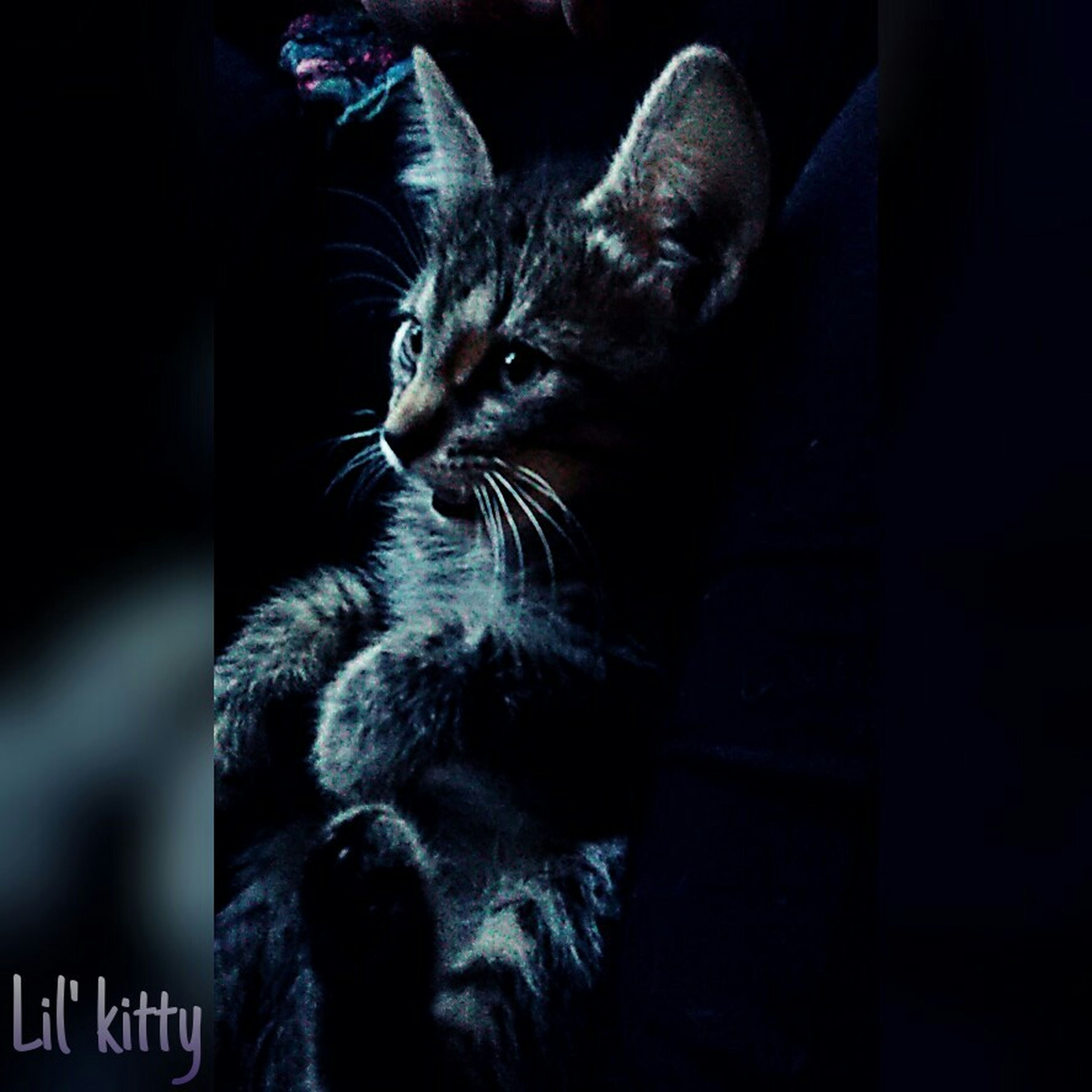 animal themes, one animal, pets, domestic cat, mammal, domestic animals, cat, feline, whisker, indoors, relaxation, close-up, black color, looking away, focus on foreground, portrait, zoology, alertness, sitting, no people
