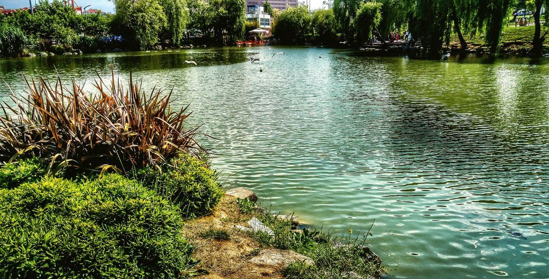 Water Tranquility Tranquil Scene Lake Nature Growth Scenics Plant River Beauty In Nature Day Outdoors Non-urban Scene Green No People Waterfront Green Color