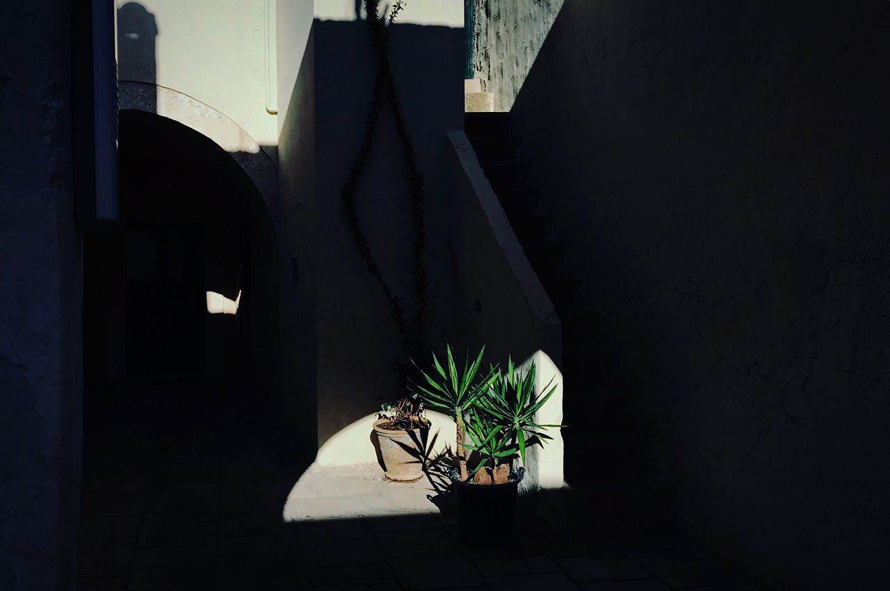 Light And Shadow Light Shadows & Lights Potted Plant Plant Growth Shadow IPhone Photography Iphonesia Iphonephotography Composition Natural Light IPhone Iphoneonly IPhoneography VSCO Cam Minimalism No People Geometric Shapes Shadows Atmosphere