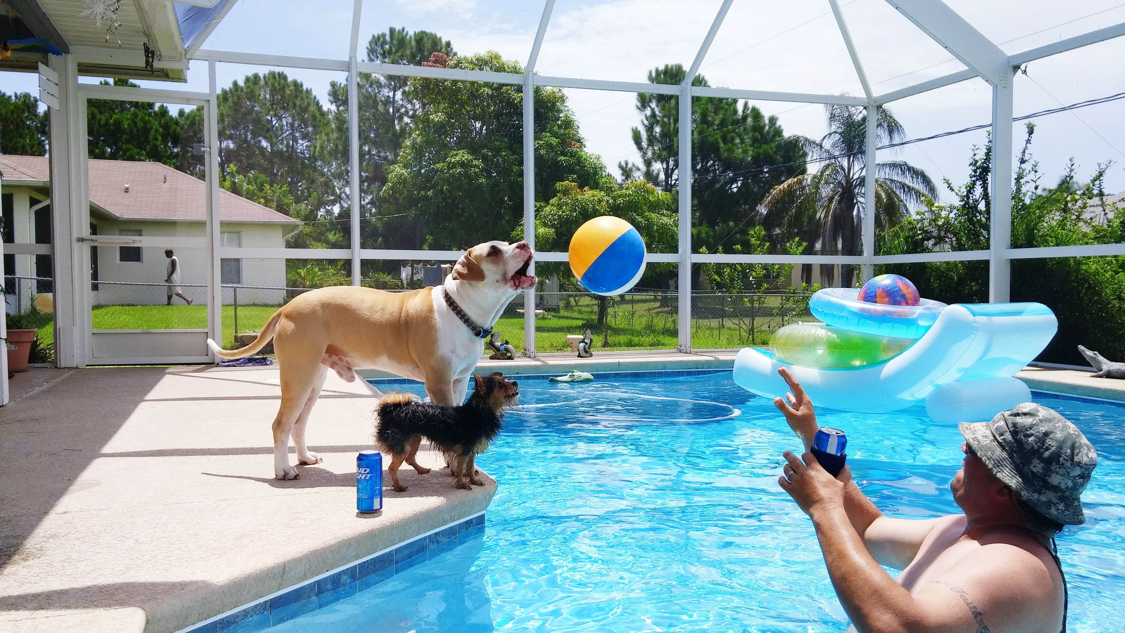 water, lifestyles, domestic animals, pets, leisure activity, holding, swimming pool, dog, person, mammal, blue, animal themes, one animal, men, sitting