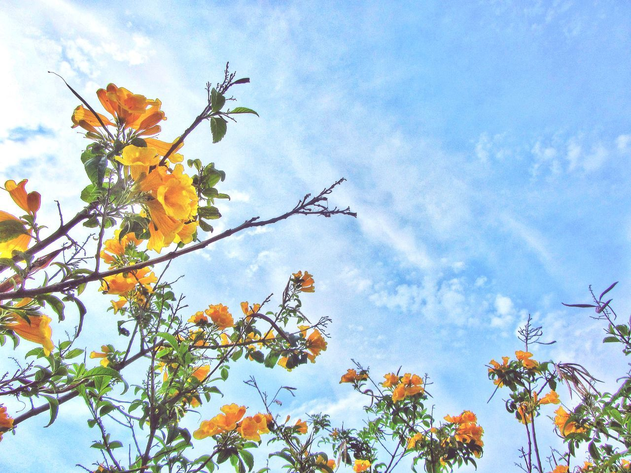 Low Angle View Sky Nature Growth Flower Tree Beauty In Nature Day Outdoors Cloud - Sky Close-up Nature Photography Naturelovers EyeEm Nature Lovers EyeEm Nature Lover Eyeemnaturelover Nature_collection