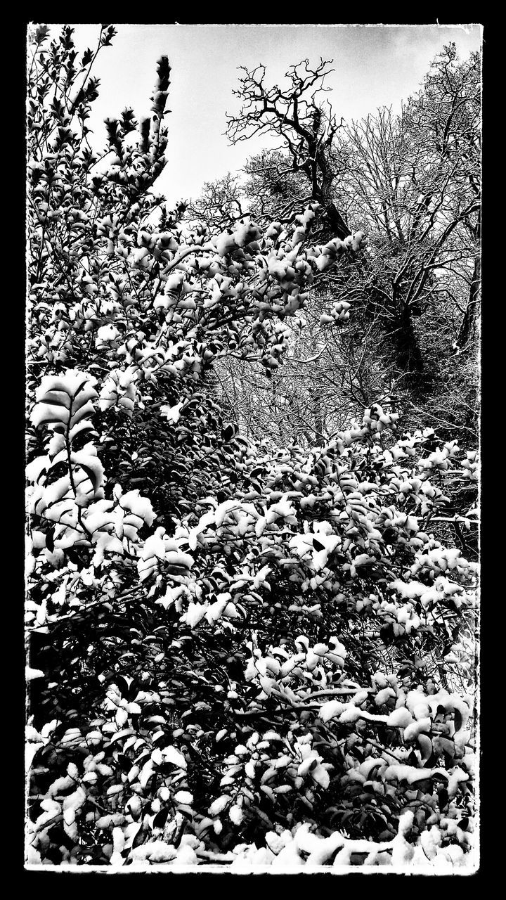 Bushes And Trees Covered In Snow