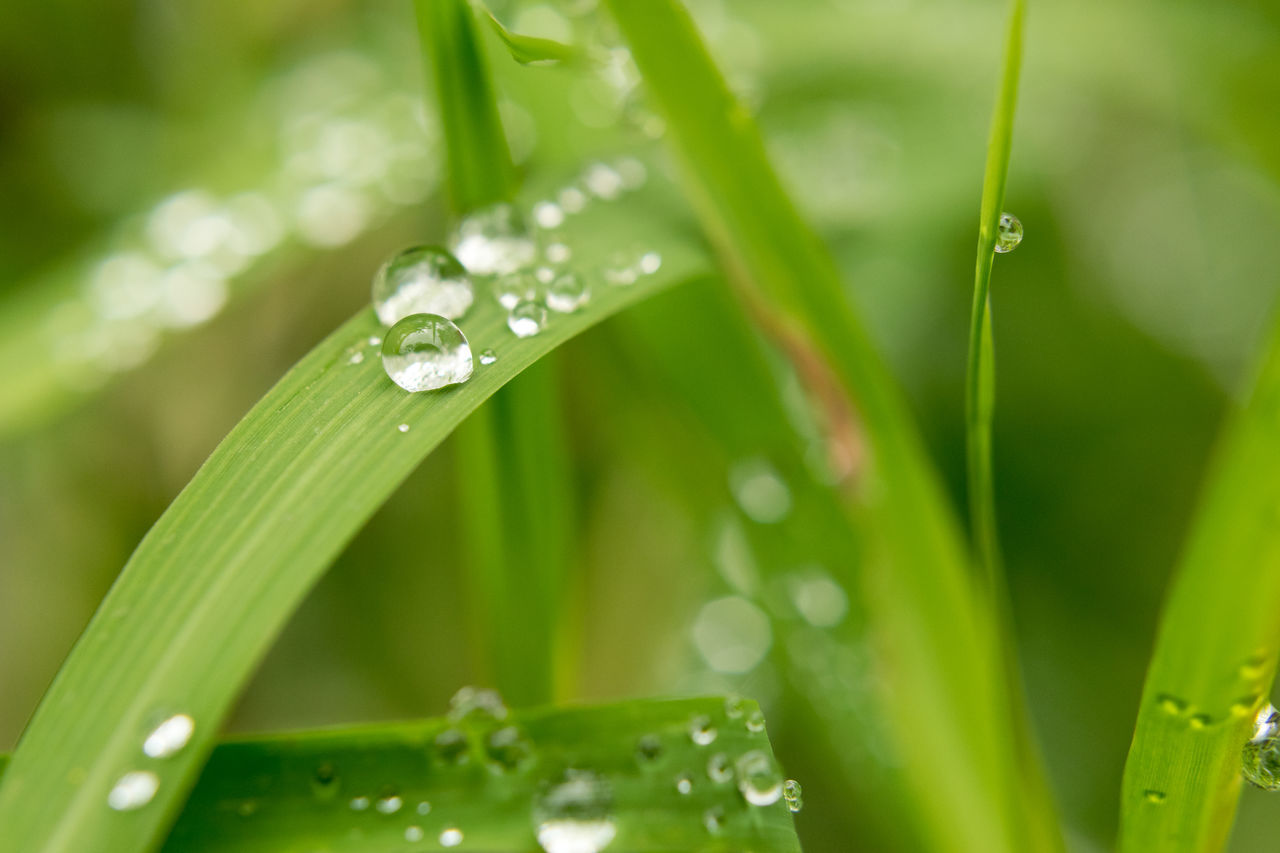 Drop Water Wet Nature Dew Leaf Green Color Close-up Growth Rain Beauty In Nature Plant Blade Of Grass Fragility No People Grass Environment RainDrop Day Freshness Macro Macro Photography BokehHigh Angle View Nature Photography