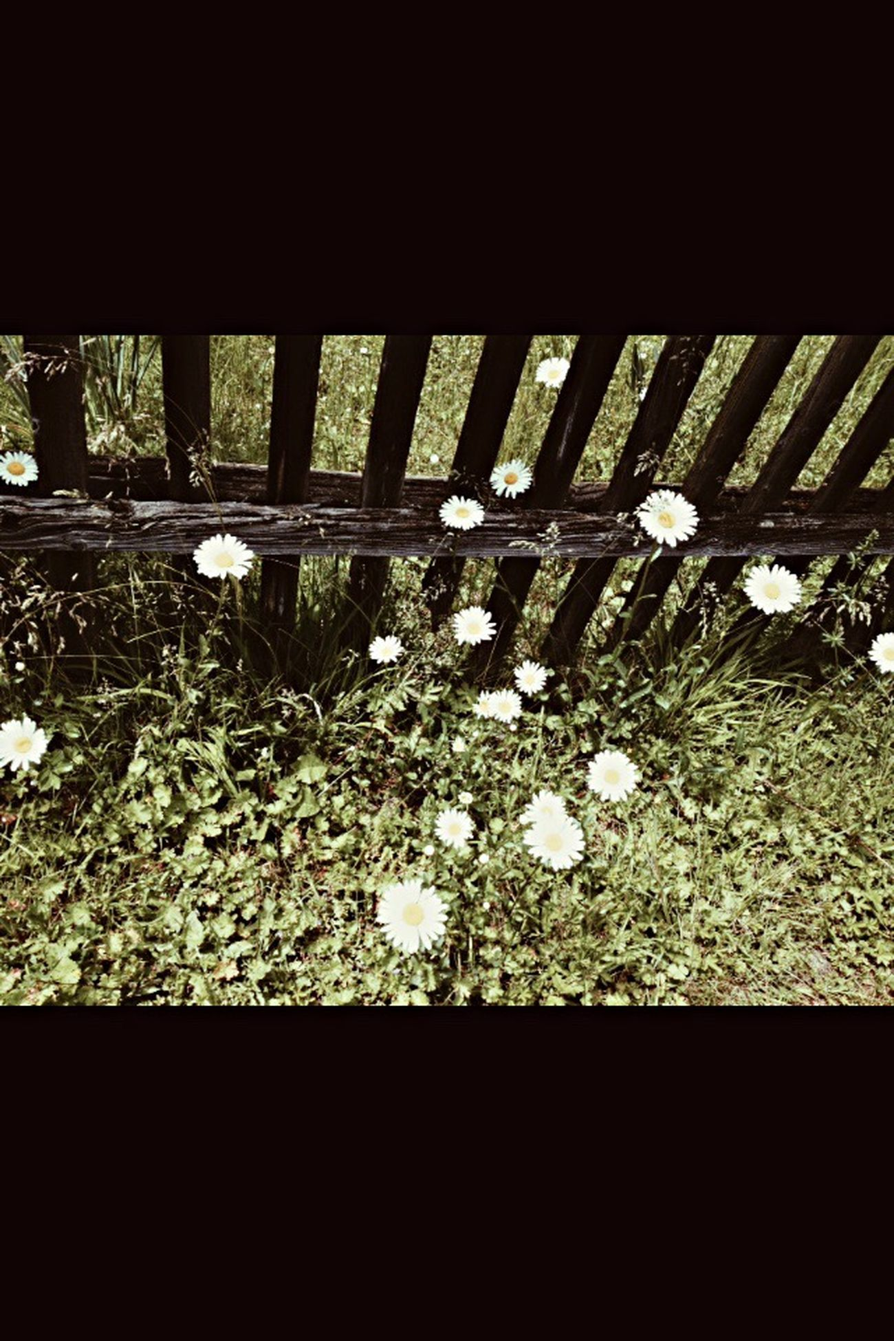 Daisy Cellulartelephonecamera