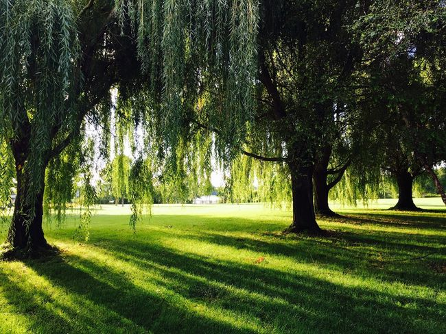 Good Morning Green Sun Rays Sun Rays Penetrating Trees A Gorgeous Day Beauty In Nature Quiet Moments Gallery EyeEm Nature Lover